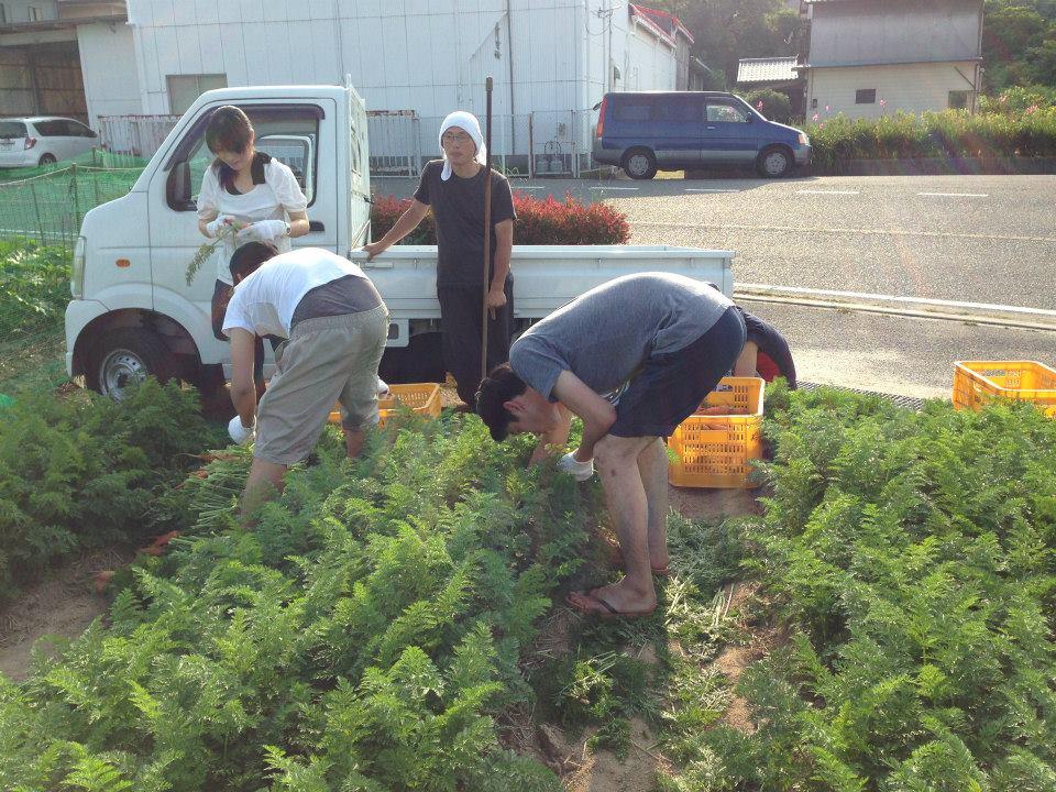 にんじん収穫