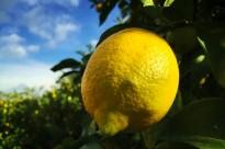 urtrac-lemon