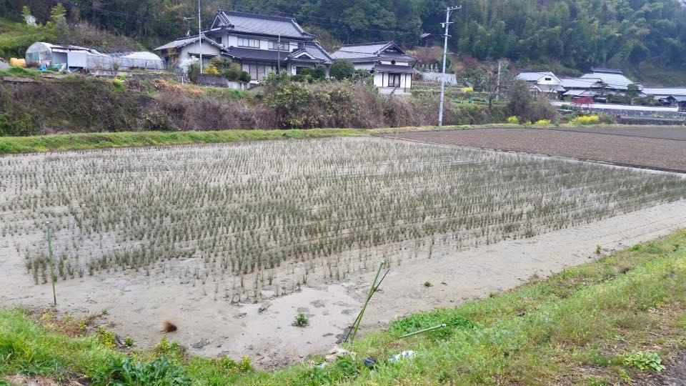 【いぐさ部】い草を編むことでわかること。
